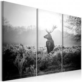 Quadro - Black and White Deer I