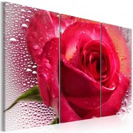 Cuadro - Lady Rose - triptych