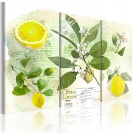 Quadro - Fruit: lemon