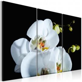 Cuadro - Orquídea de color de nieve