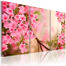 Cuadro - Flor de cerezo