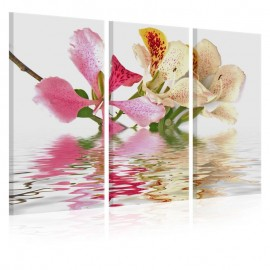 Quadro - Orchid with colorful spots
