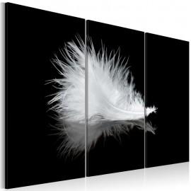 Quadro - A small feather