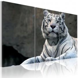 Cuadro - Tigre blanco