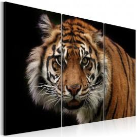Quadro - A wild tiger