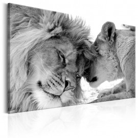 Quadro - Lion's Love