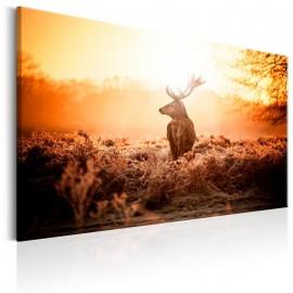 Cuadro - Deer in the Sun