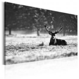 Quadro - Lying Deer