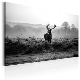 Quadro - Deer in the Wild