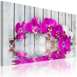 Cuadro - armonía: orquídea