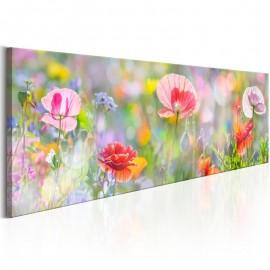 Cuadro - Rainbow of Morning Poppies