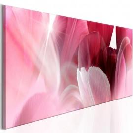Quadro - Flowers: Pink Tulips