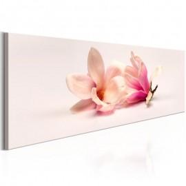 Quadro - Beautiful Magnolias