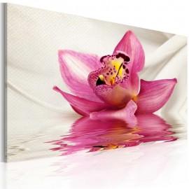Cuadro - Unusual orchid